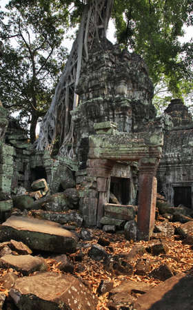 Ta Prohm temple at Angkor. Siem Reap province. Cambodia
