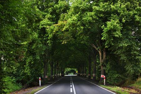 Road near Chojna. Poland