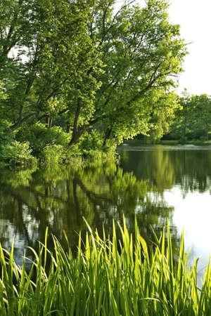 Pond in Zwierzyniec. Poland