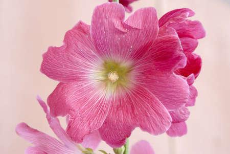 summer flower Stock Photo - 1933488