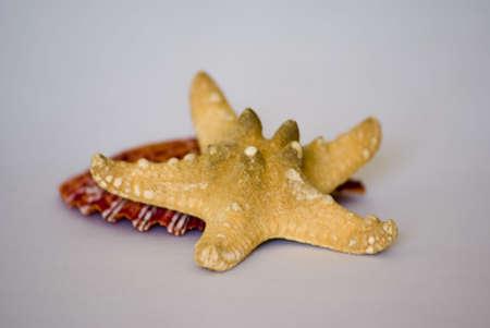 seastar: sea-star and shell