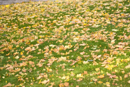 nostalgy: autumn yellow leafs on the grass