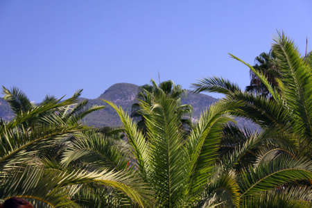 Palm Stock Photo - 6128259