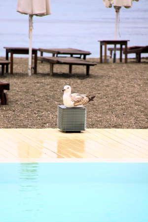 tropical swimming pool near the beach photo