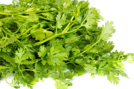 coriandrum sativum: hierba de cilantro fresco (cilantro) aislado en un fondo blanco  Foto de archivo