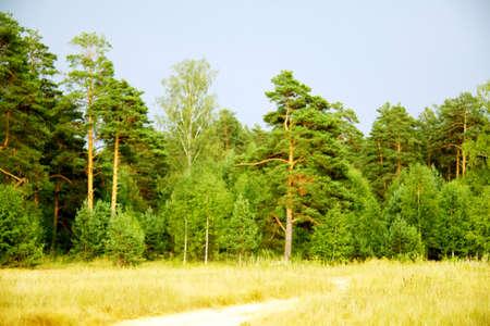 russian forest summer