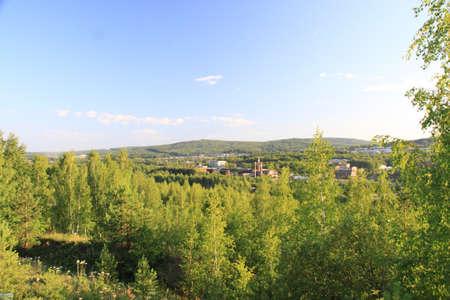 Beautiful forest landscape photo