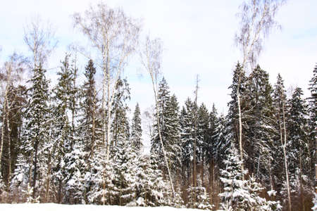 Beautiful winter forest landscape in Russia photo