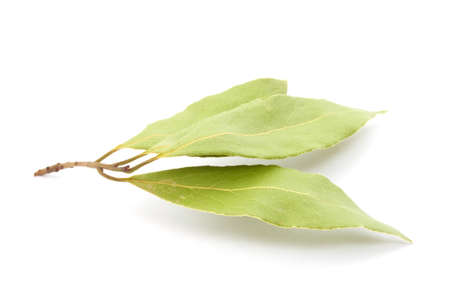 Laurel leaves isolated on white photo