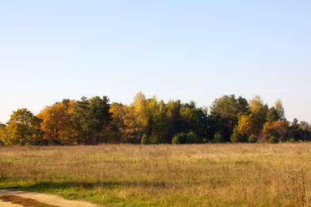 Beautiful landscape. Field and edge of forest Russia photo