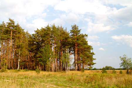 grass valley in forest during summer photo
