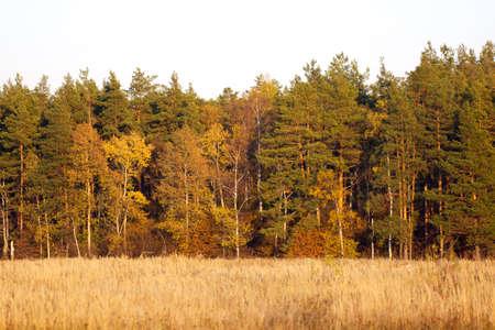 Autumn forest Stock Photo - 11349457