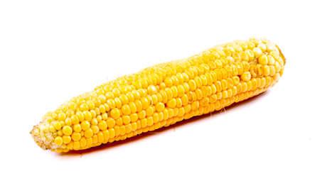 corn isolated on white background Stock Photo - 11370721
