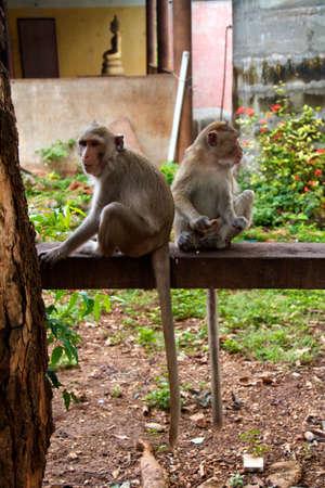 Monkey on  Jungle of Thailand photo