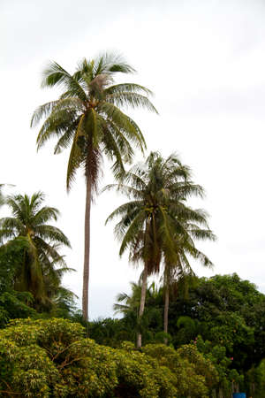 Palm tree on south of Thailand Stock Photo - 11390535