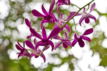 Beautiful orchid - phalaenopsis Stock Photo - 11893106