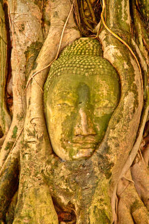 Buddha head encased in tree roots at the temple of Wat Mahatat in Ayutthaya ,Thailand. photo