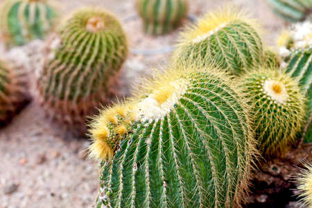 Cactus Stock Photo - 12002048