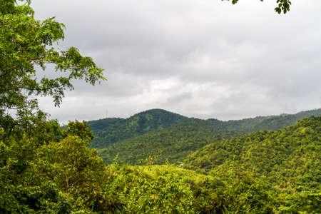 Beautiful rain forest photo