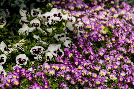 Spring flowers in the garden photo