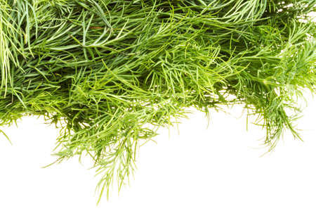 Fresh branches of green dill isolated on white background. photo