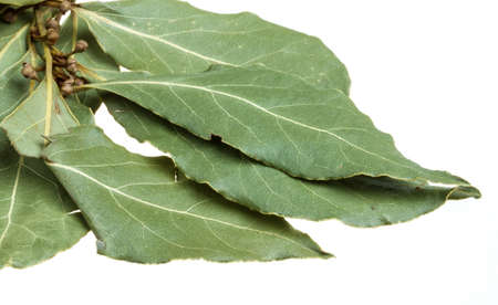 Aromatic Bay leaves (laurel) isolated over white background photo