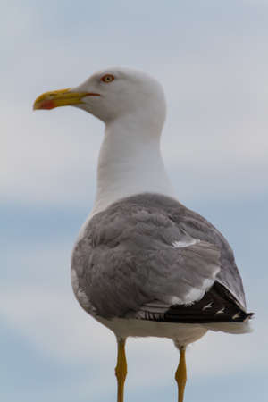 Sea Gull Stock Photo - 16840178