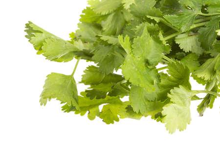 fresh coriander Stock Photo - 17489532