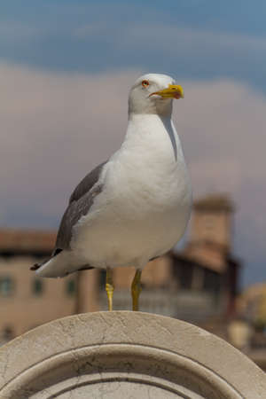 Sea Gull Stock Photo - 18151367