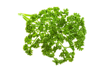 Parsley branch photo