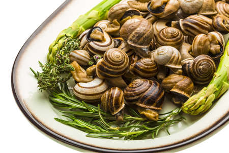 Escargot with asparagus, rosemary, thymus and tomato photo