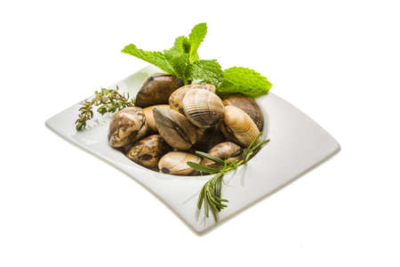 almejas: Spanish mollusc or clams Stock Photo