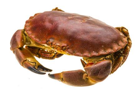 marine crustaceans: Raw crab