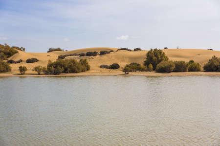 hummock: Oasis in Maspalomas Dunas Stock Photo