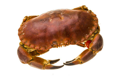 Raw crab photo