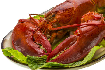 Large Lobster photo