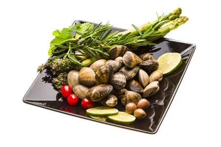 mollusc: Spanish mollusc - Almeja Stock Photo