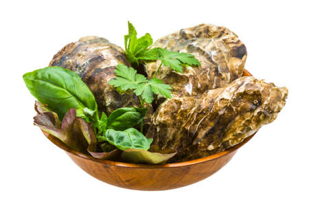 Fresh oyster Stock Photo - 19554692