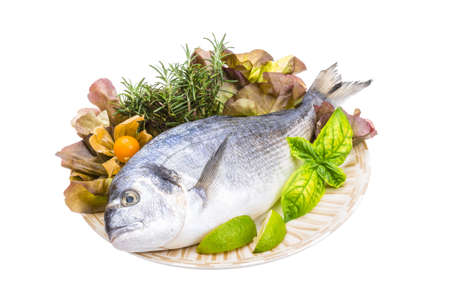 Fresh raw dorada Stock Photo - 19554450