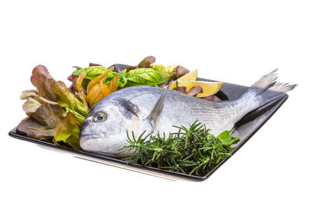 Fresh raw dorada Stock Photo - 19554641