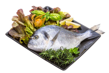 Fresh raw dorada Stock Photo - 19554685