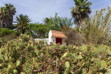 Cactus Opuntia photo