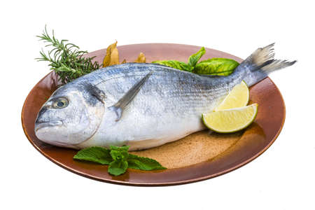 Fresh raw dorada Stock Photo - 19565674