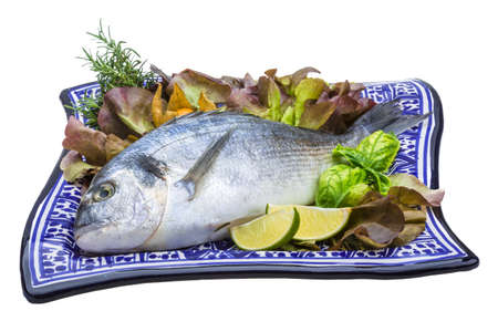 Fresh raw dorada Stock Photo - 19565675