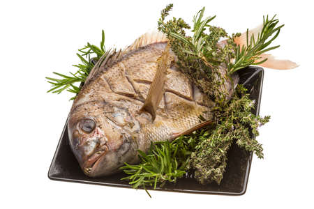 Grilled sea perch Stock Photo - 19565728