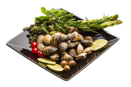 Spanish mollusc photo
