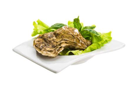 Fresh oyster photo
