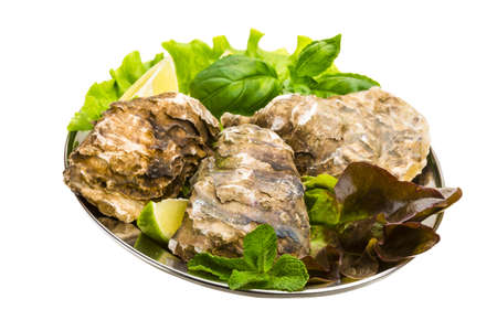 Fresh oysters Stock Photo - 19627403