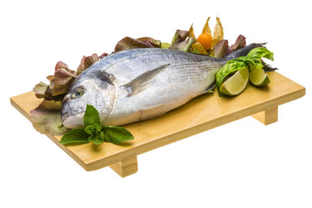 Fresh raw dorada Stock Photo - 19626900