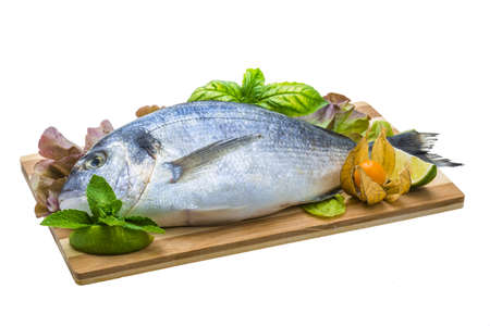 Fresh raw dorada Stock Photo - 19627441